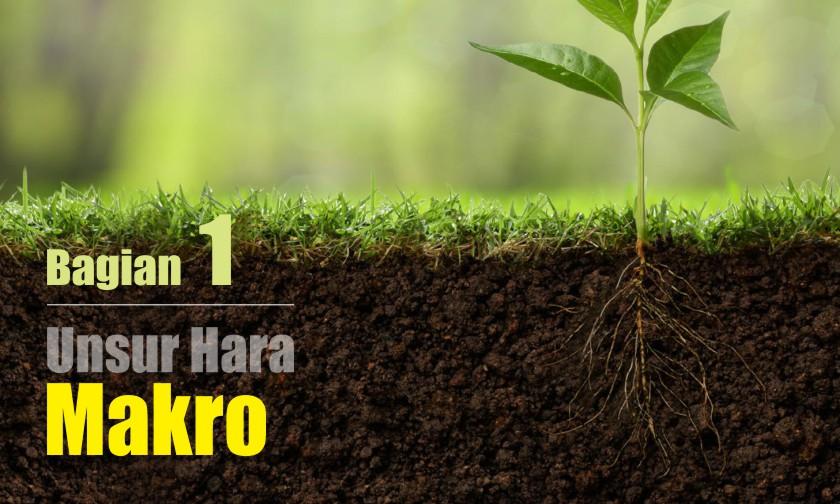 Unsur-unsur Hara MAKRO dan Karakteristiknya