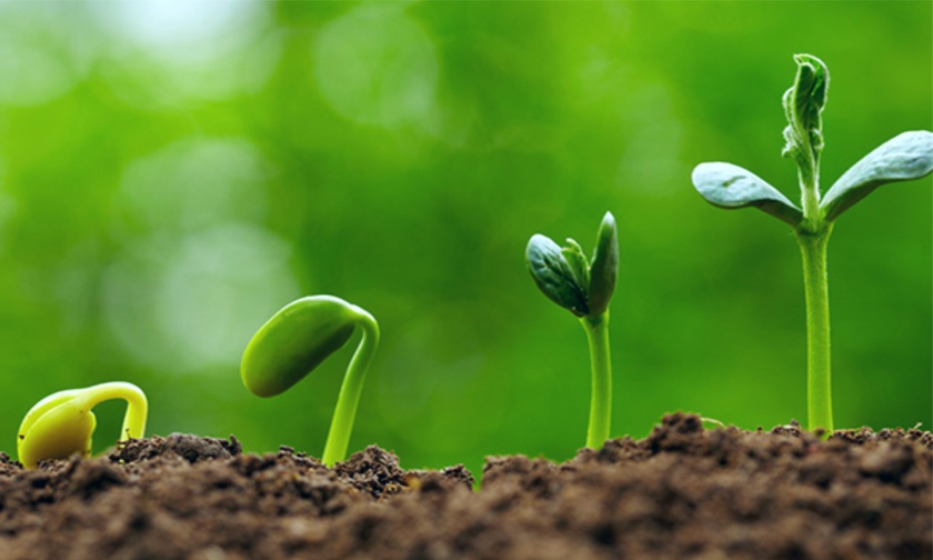 Bagaimana Tanaman Tumbuh dan Memberikan Hasil?